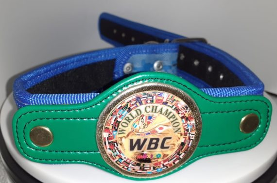 WBC Championship Belt Blue Camo Dog Collar